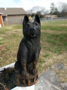 Black German Shepard - Front view straight on