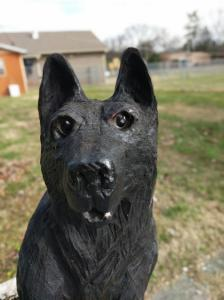 Black german shepard- front view facial