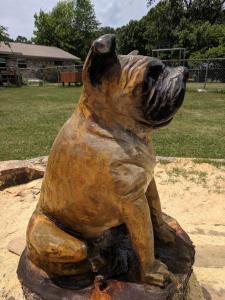English Bull dog full right side veiew