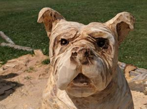 English bull dog face unfinished