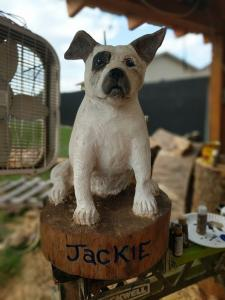Jack Russell front view 1