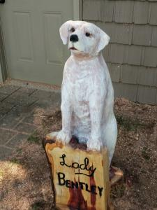 Yellow lab Standing front view close