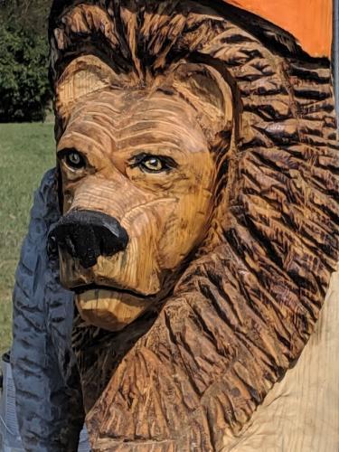 lion close up